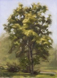 l_tree_mountpleasant