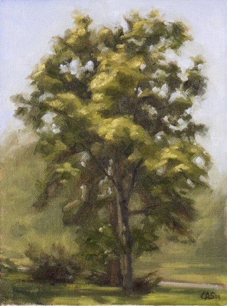 paintings of trees. practice painting trees!